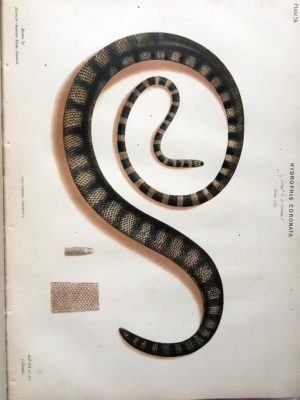 The Thanatophidia of India Being a Description of the Venomous Snakes of the Indian Peninsula, with an Account of the Influence of their Poison on Life ; and a Series of Experiments.